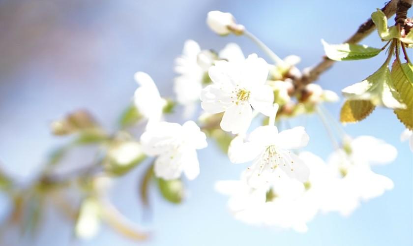 Beitragsbild_12v12-April