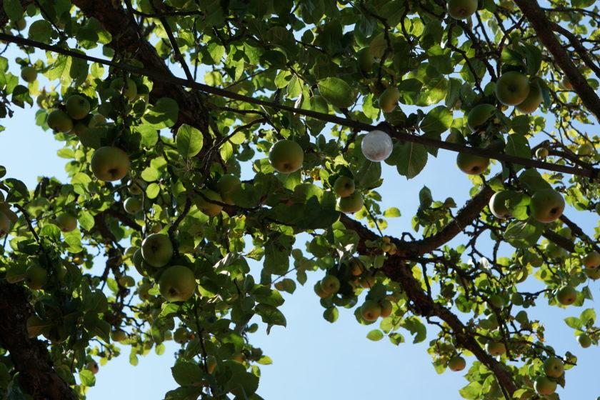 Obstgärtla